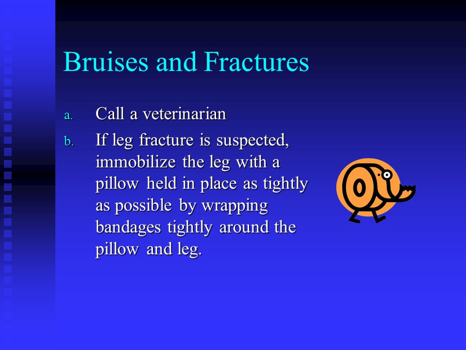 Bruises and Fractures Call a veterinarian