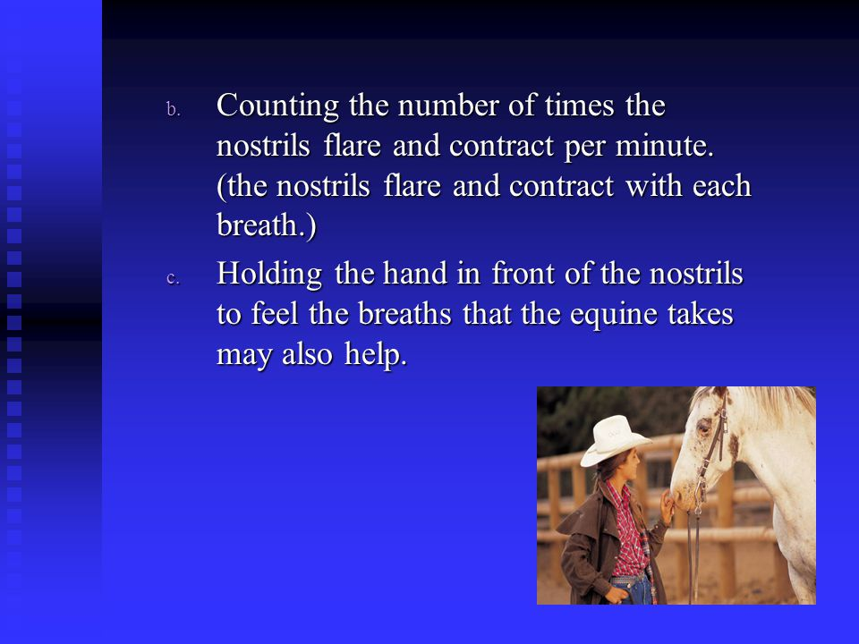 Counting the number of times the nostrils flare and contract per minute. (the nostrils flare and contract with each breath.)