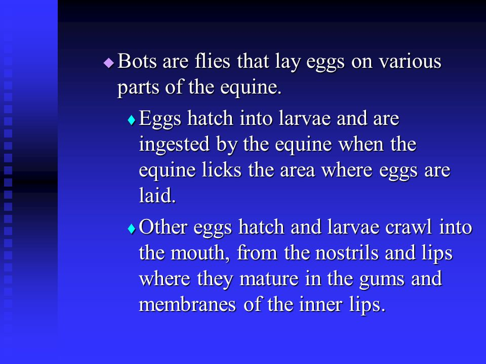 Bots are flies that lay eggs on various parts of the equine.