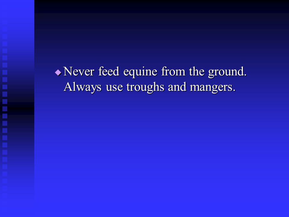 Never feed equine from the ground. Always use troughs and mangers.