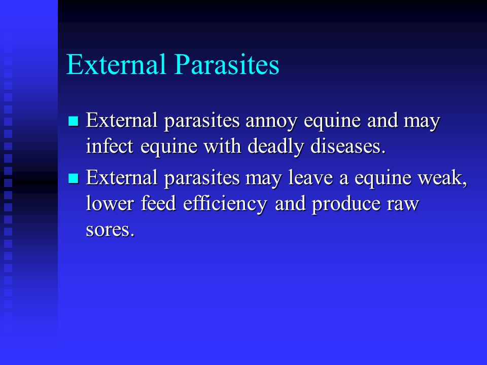 External Parasites External parasites annoy equine and may infect equine with deadly diseases.