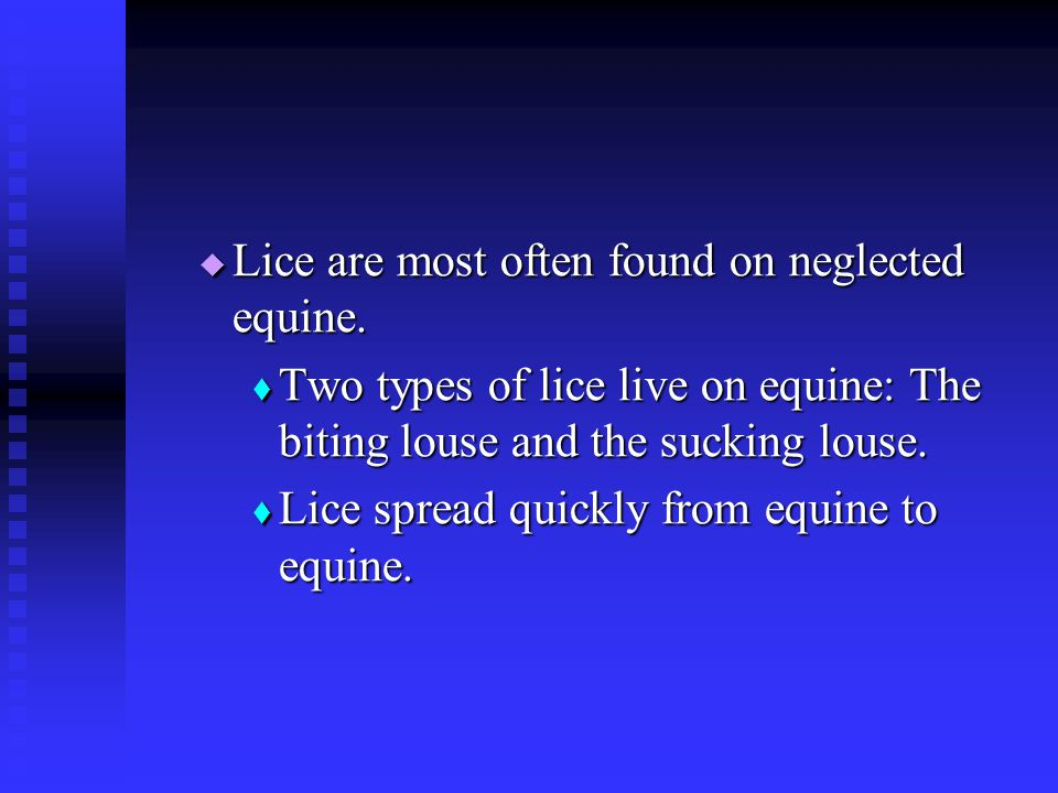Lice are most often found on neglected equine.