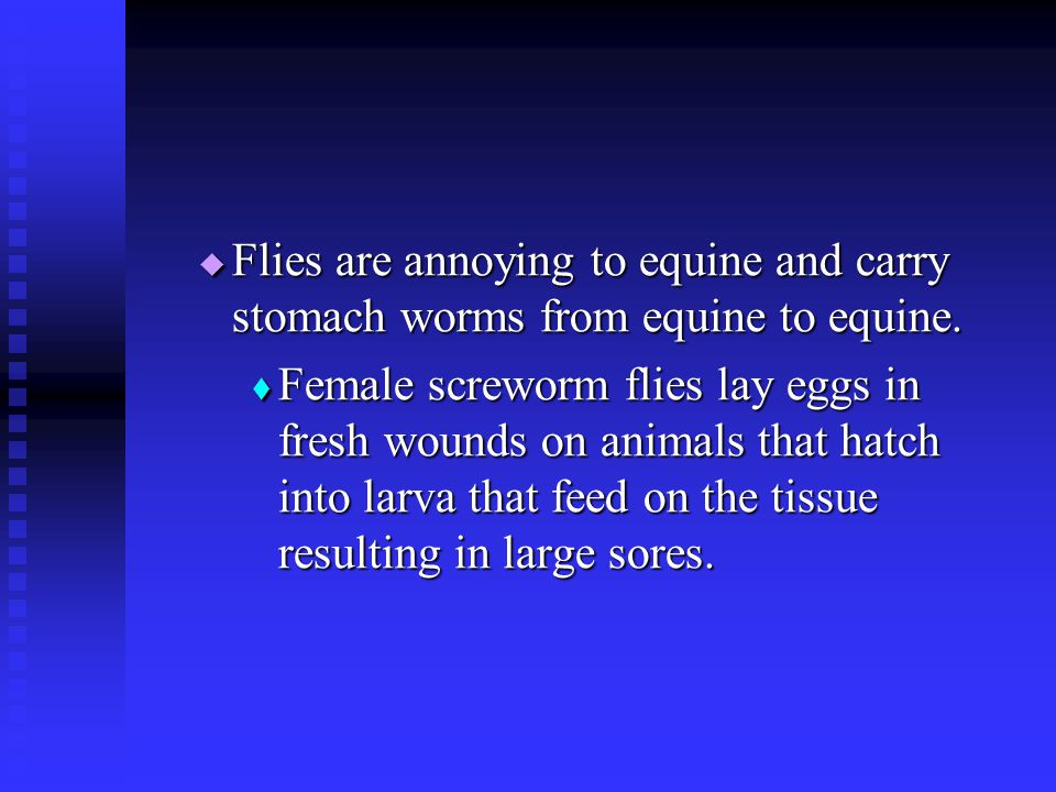 Flies are annoying to equine and carry stomach worms from equine to equine.