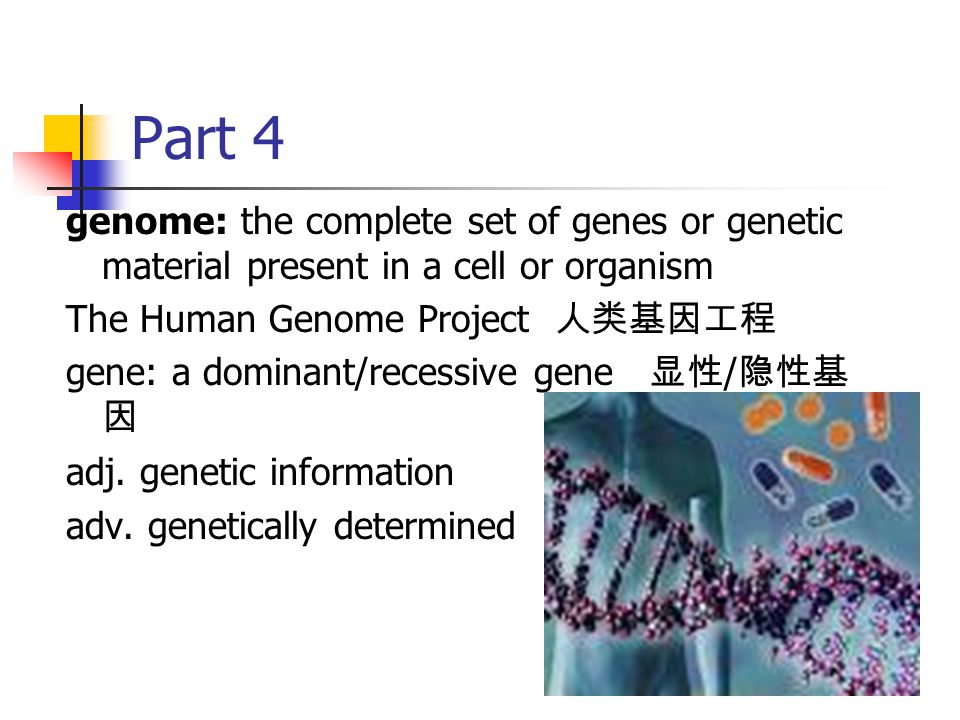 Part 4 genome: the complete set of genes or genetic material present in a cell or organism. The Human Genome Project 人类基因工程.