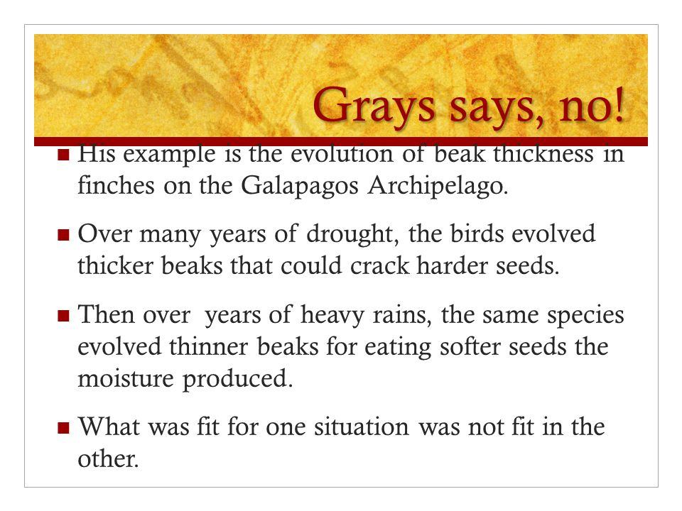 Grays says, no! His example is the evolution of beak thickness in finches on the Galapagos Archipelago.