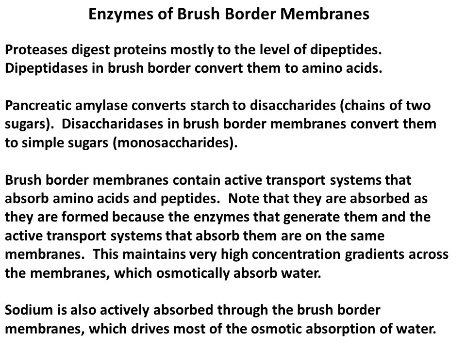 Enzymes of Brush Border Membranes