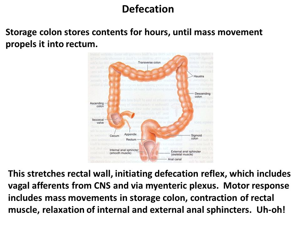Defecation Storage colon stores contents for hours, until mass movement propels it into rectum.