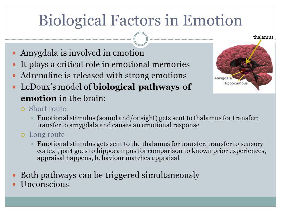 Biological Factors in Emotion