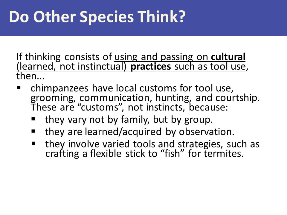 Do Other Species Think If thinking consists of using and passing on cultural (learned, not instinctual) practices such as tool use, then...