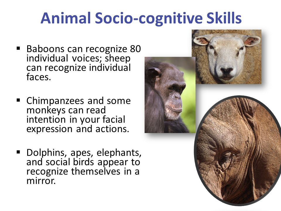 Animal Socio-cognitive Skills
