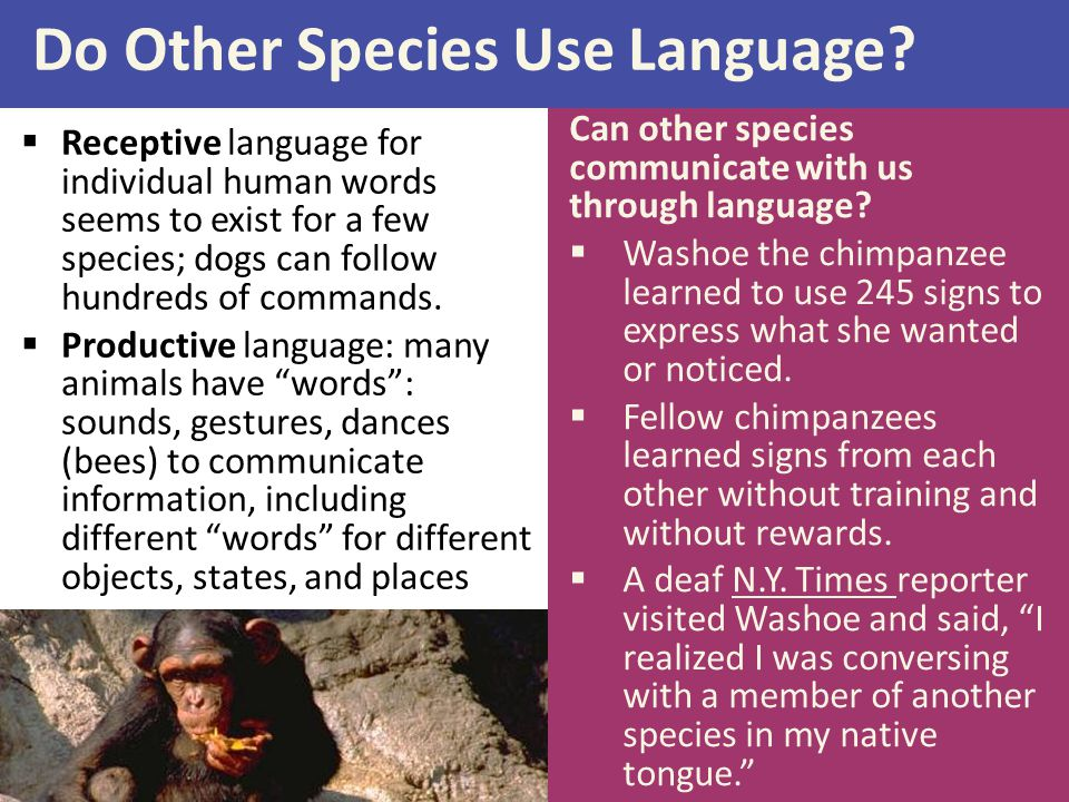 Do Other Species Use Language