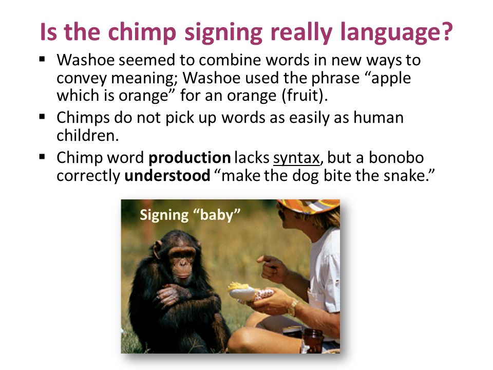 Is the chimp signing really language
