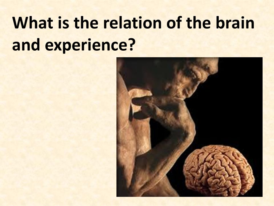 What is the relation of the brain and experience