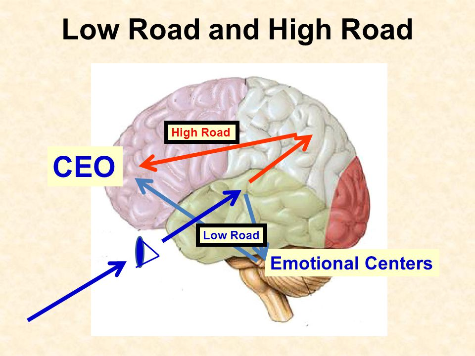 Low Road and High Road High Road CEO Low Road Emotional Centers
