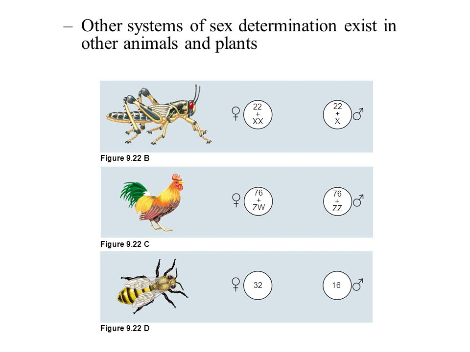 Other systems of sex determination exist in other animals and plants