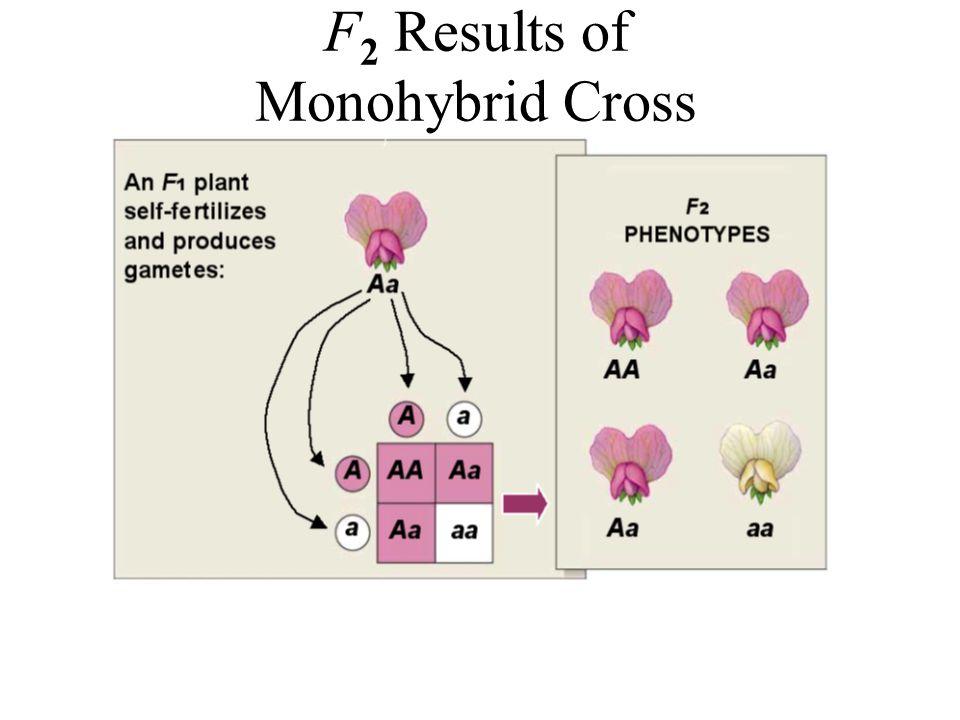 F2 Results of Monohybrid Cross