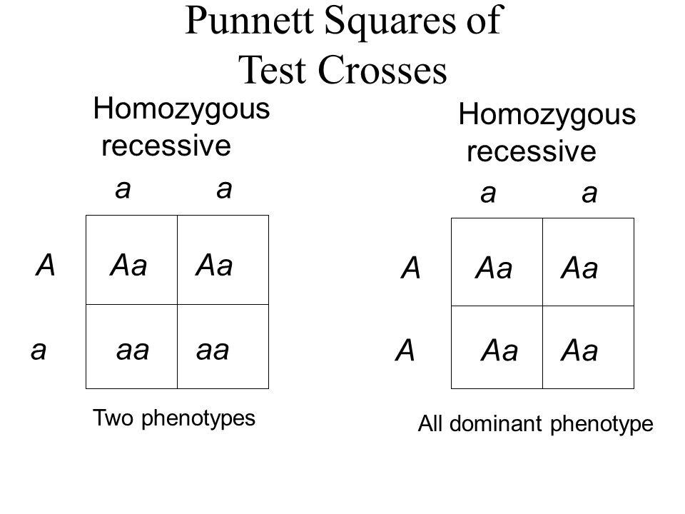 Punnett Squares of Test Crosses