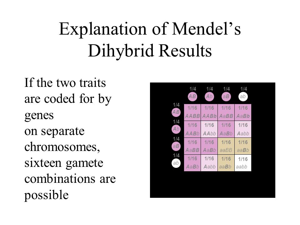 Explanation of Mendel's Dihybrid Results