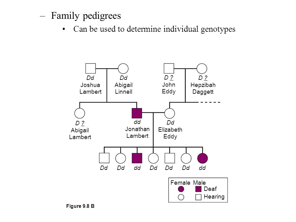 Family pedigrees Can be used to determine individual genotypes Dd