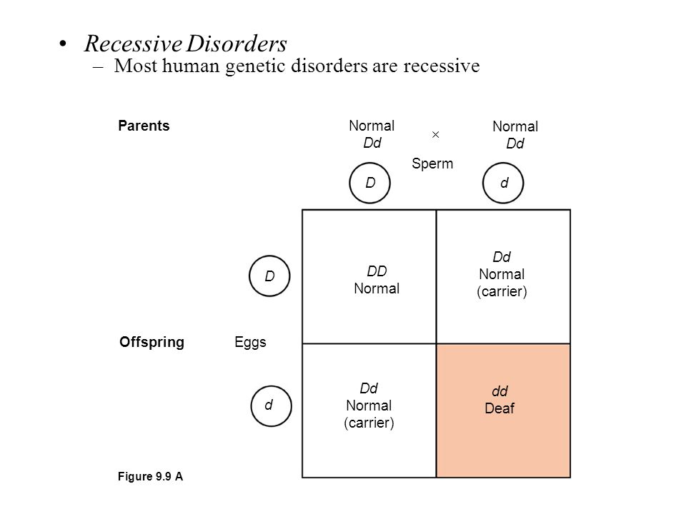 Recessive Disorders Most human genetic disorders are recessive 