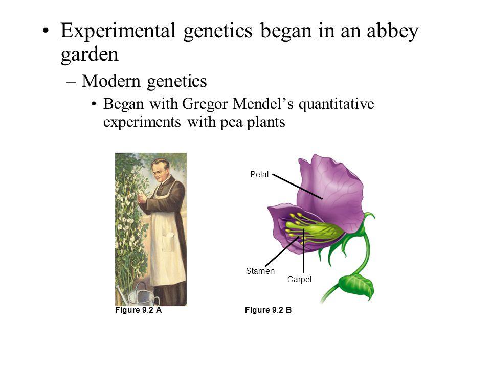 Experimental genetics began in an abbey garden