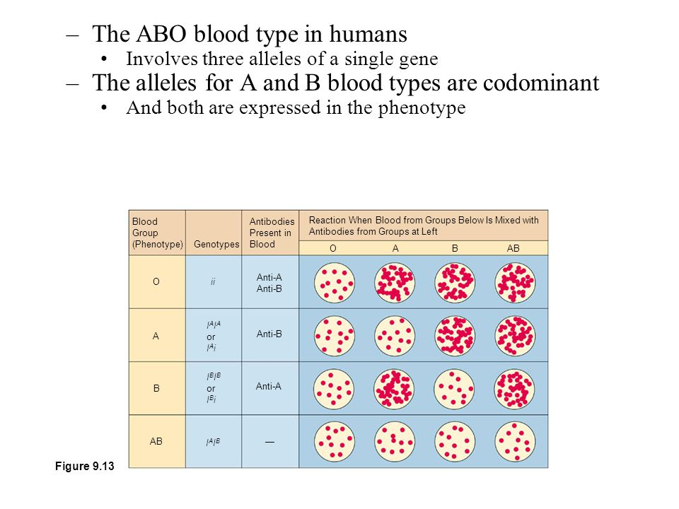 The ABO blood type in humans