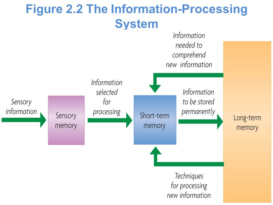 Figure 2.2 The Information-Processing System