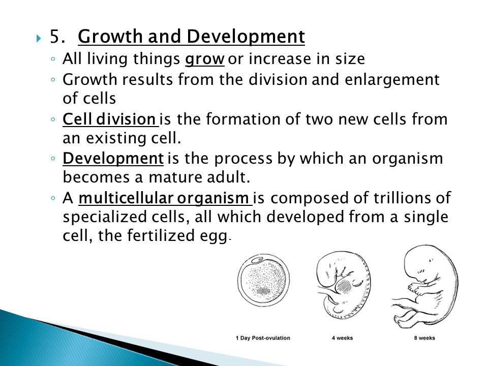 5. Growth and Development