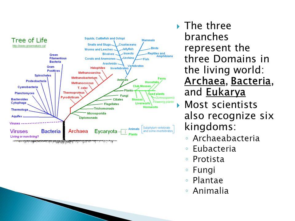 Most scientists also recognize six kingdoms: