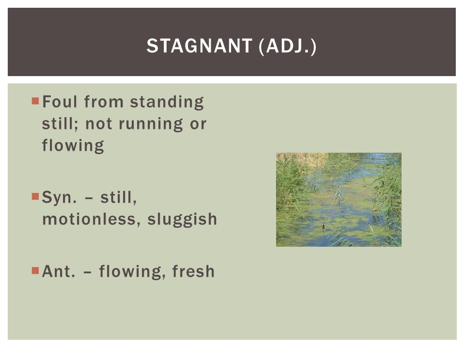 Stagnant (adj.) Foul from standing still; not running or flowing