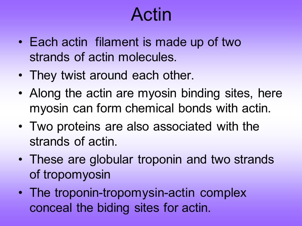 Actin Each actin filament is made up of two strands of actin molecules. They twist around each other.