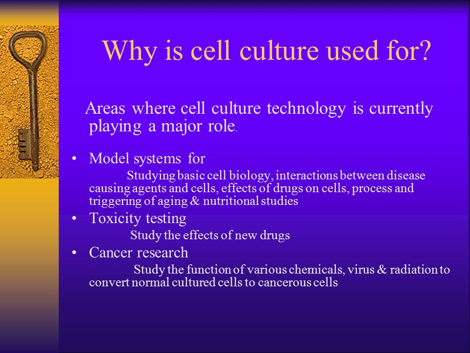 Why is cell culture used for