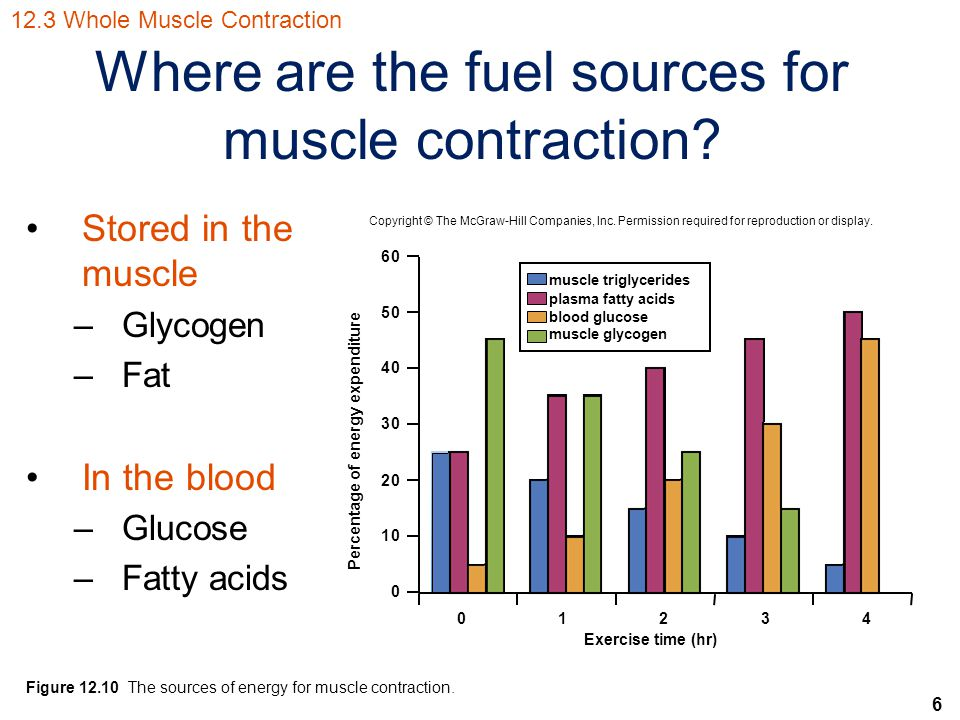 Where are the fuel sources for muscle contraction
