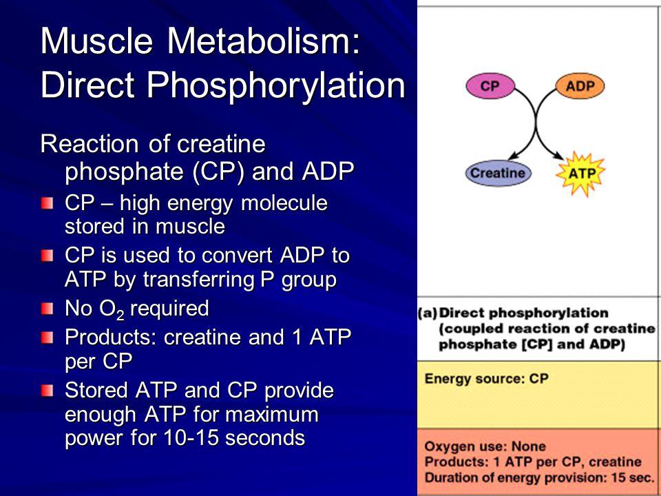 Muscle Metabolism: Direct Phosphorylation