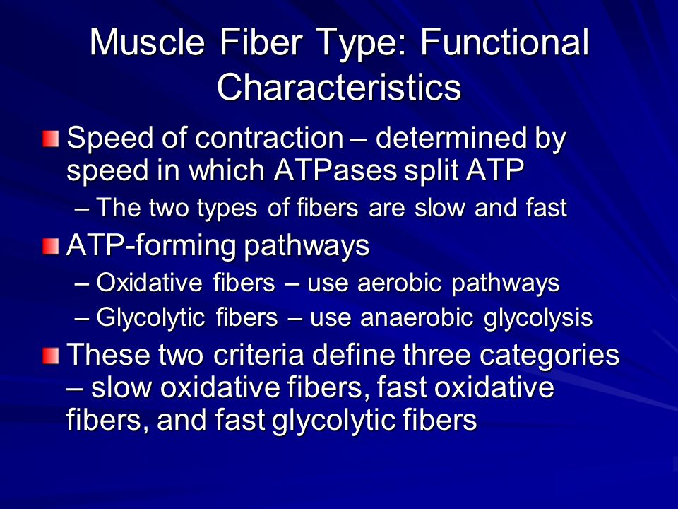 Muscle Fiber Type: Functional Characteristics