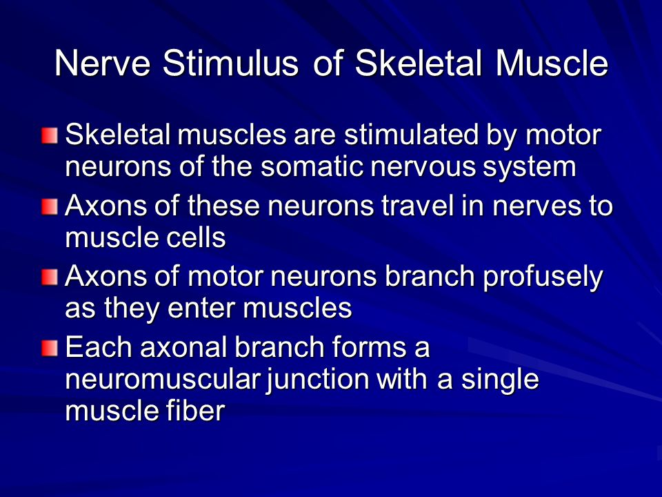 Nerve Stimulus of Skeletal Muscle