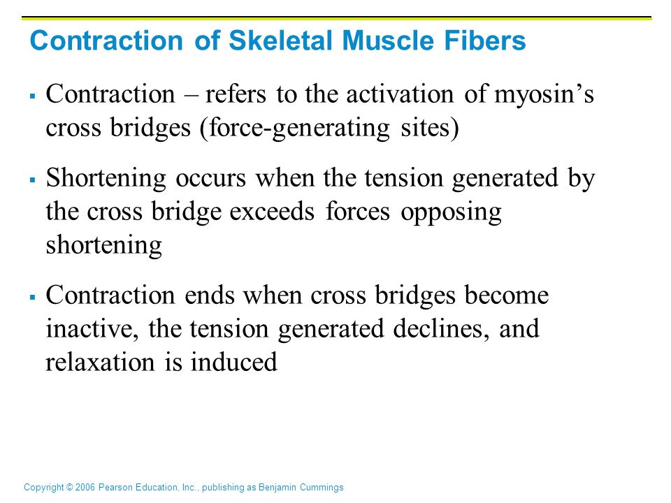 Contraction of Skeletal Muscle Fibers