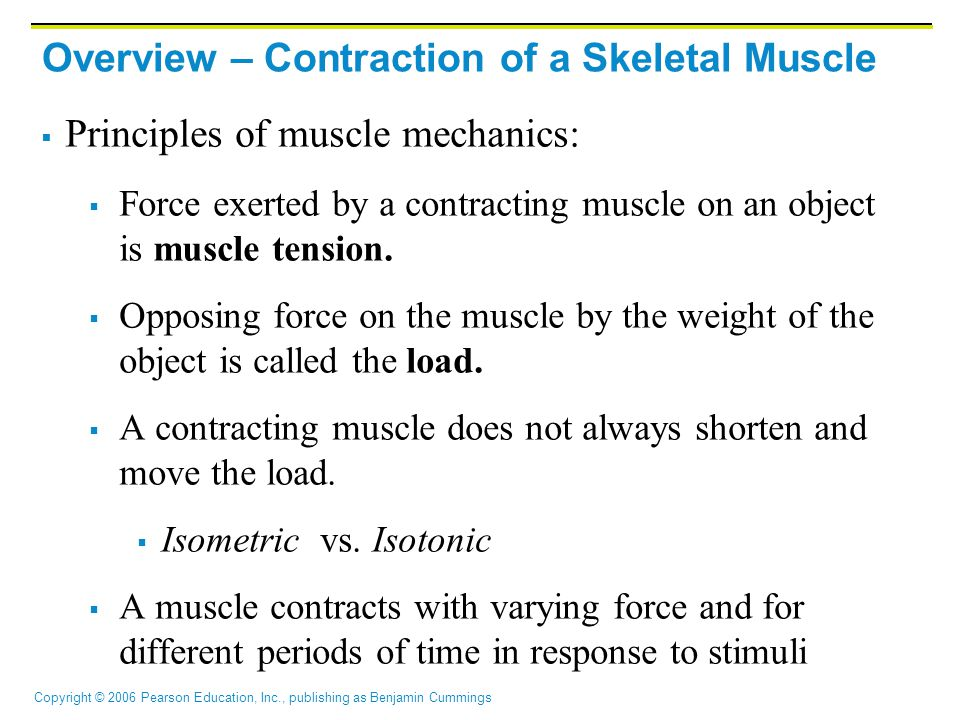 Overview – Contraction of a Skeletal Muscle