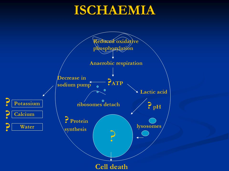 ISCHAEMIA ATP pH Protein Cell death Reduced oxidative