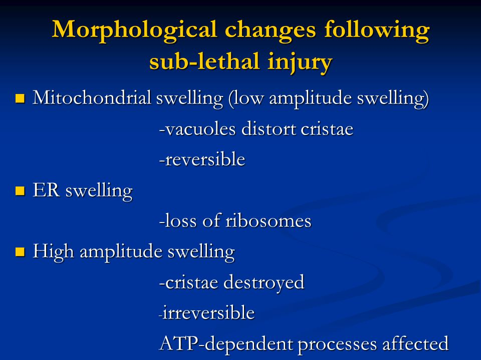 Morphological changes following sub-lethal injury