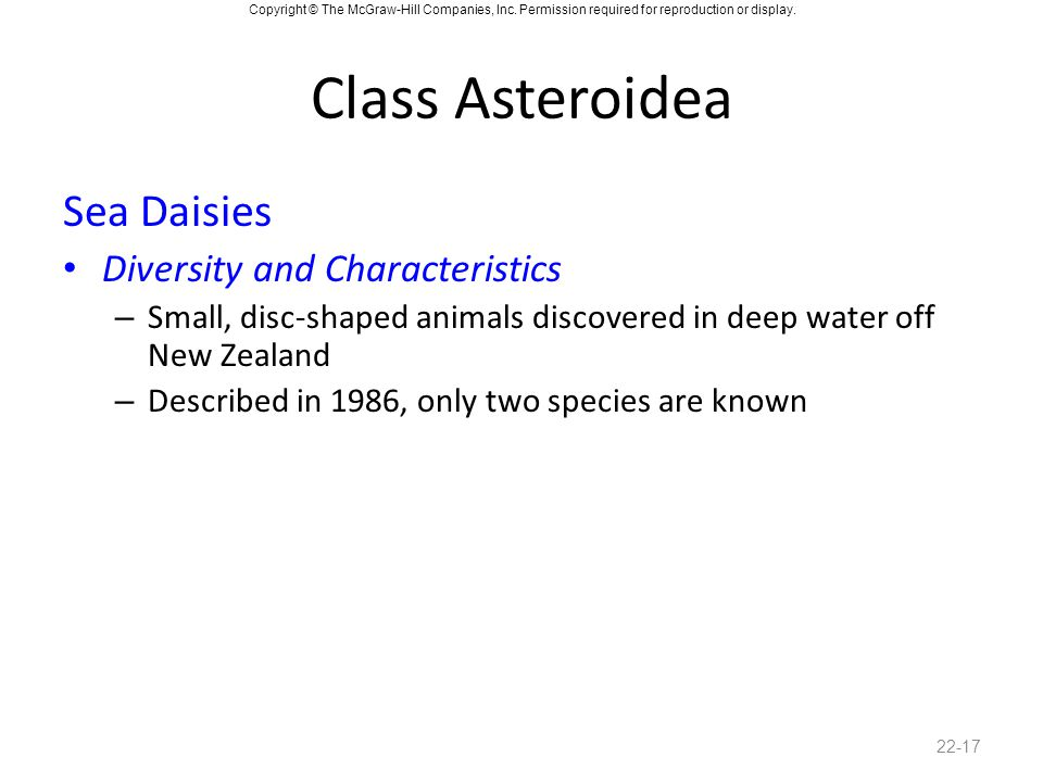 Class Asteroidea Sea Daisies Diversity and Characteristics