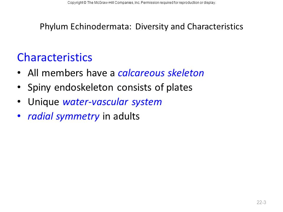 Phylum Echinodermata: Diversity and Characteristics