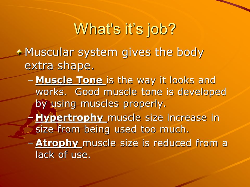 What s it's job Muscular system gives the body extra shape.
