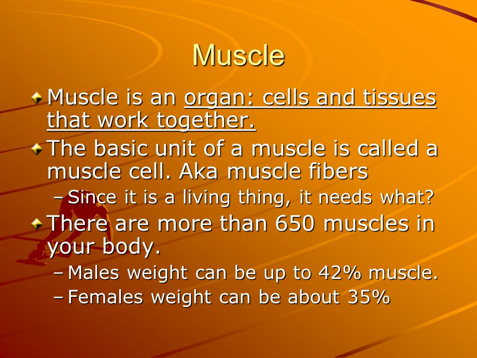 Muscle Muscle is an organ: cells and tissues that work together.
