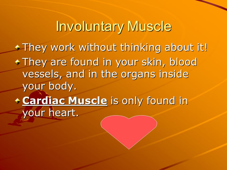 Involuntary Muscle They work without thinking about it!