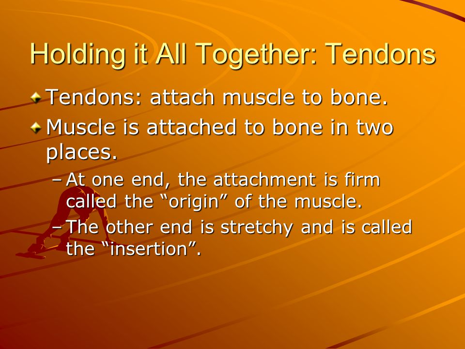 Holding it All Together: Tendons