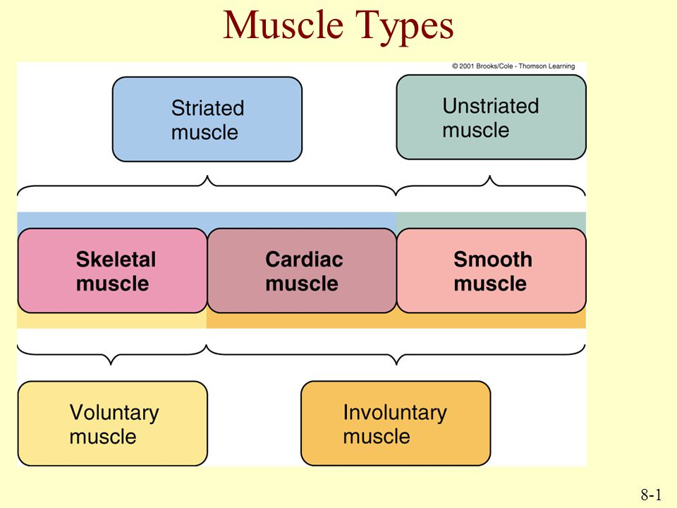 Muscle Types 8-1