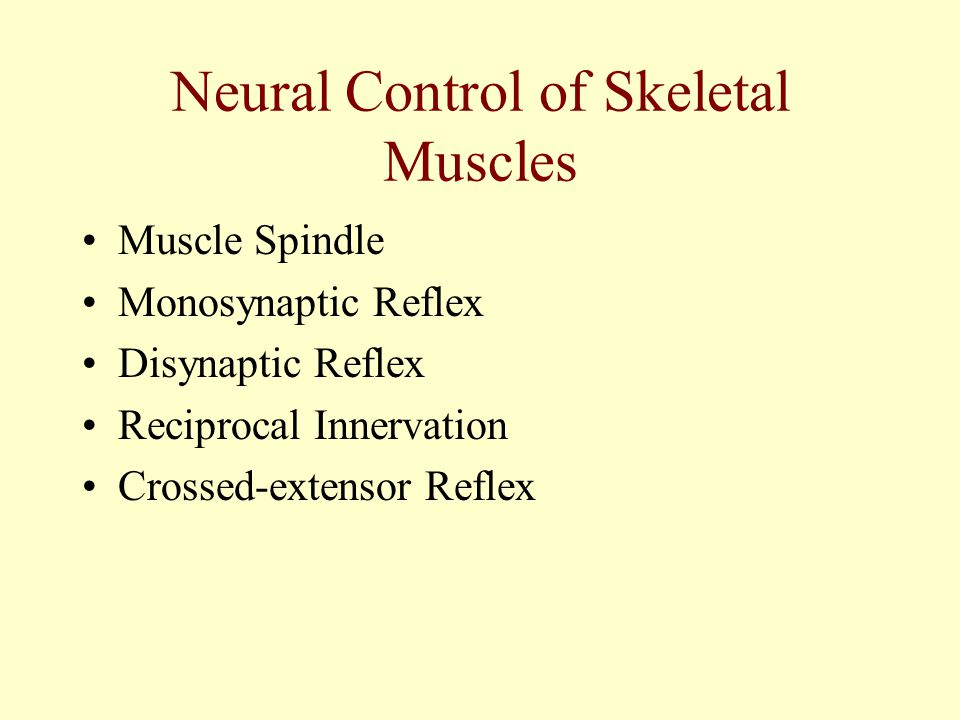 Neural Control of Skeletal Muscles