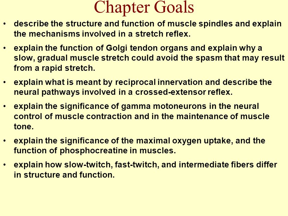 Chapter Goals describe the structure and function of muscle spindles and explain the mechanisms involved in a stretch reflex.
