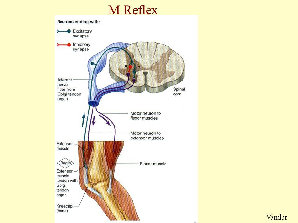 M Reflex Vander